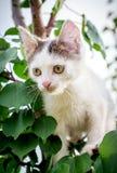 白色被察觉的小猫坐在一厚实的leaf_的一棵树 免版税库存图片