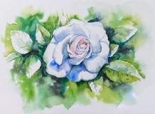 白色被绘的玫瑰水彩 库存图片