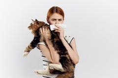 白色被隔绝的背景的美丽的少妇拿着一只猫,过敏 库存图片