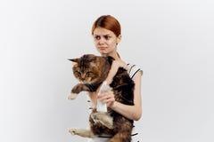 白色被隔绝的背景的年轻美丽的妇女拿着一只猫,缅因浣熊 免版税库存图片