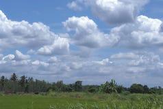 白色覆盖蓝天绿色领域 免版税图库摄影