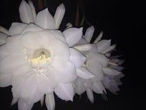 白色许多的花 库存照片