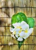 白色赤素馨花开花在绿色叶子装饰的花束放置在有拷贝空间的竹木席子 库存照片