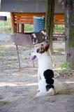 白色逗人喜爱的狗宠物 免版税图库摄影