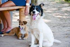 白色逗人喜爱的狗宠物 免版税库存图片