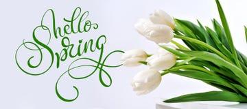 白色郁金香和文本你好春天 书法字法 库存照片