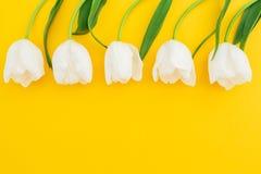 白色郁金香的花卉构成在黄色背景的 平的位置,顶视图 可用的背景文件花卉框架向量 图库摄影
