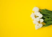 白色郁金香花束在黄色的 库存照片