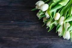 白色郁金香花束  库存图片