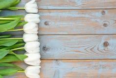 白色郁金香行在蓝灰色的打结了与空的空间布局的老木背景 免版税库存图片