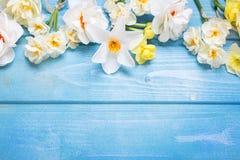 从白色郁金香,水仙, muscaries的边界在蓝色开花 库存照片