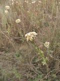白色野花在秋天在淡色口气调遣 库存照片