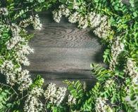 白色金合欢开花,在土气木背景的花框架 图库摄影