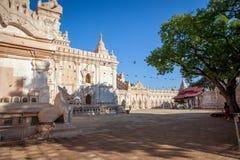 白色阿南德佛教寺庙在老蒲甘,缅甸 库存照片