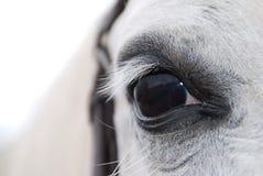 白色阿拉伯马眼睛 免版税库存照片