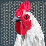 白色雄鸡和篱芭 免版税库存照片