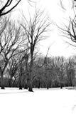 白色雪在中央公园 库存图片