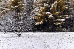 白色雪在地面和树放置在公园 库存图片