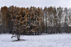 白色雪在地面和树放置在公园 免版税库存图片