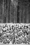 白色雪木头盖的堆 免版税库存图片