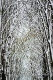 白色雪盖的黑树在冬天,抽象背景 图库摄影