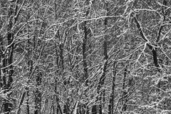 白色雪盖的黑树在冬天,抽象背景 免版税库存图片