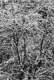 白色雪盖的黑树在冬天,抽象背景 库存照片