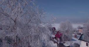 白色霜鸟瞰图在一棵冻树的在乡下冠上 在树梢的飞行 4K 影视素材