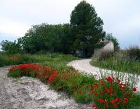 白色风车在乌铁尔,有树的巴伦西亚 自然道路在有鸦片和雏菊的乡下开花 免版税库存照片