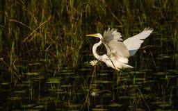 白色鸟在黑背景中 免版税库存图片