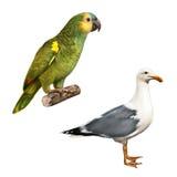 白色鸟海鸥,黄色Naped亚马逊鹦鹉 免版税库存照片