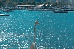 白色鸟-苍鹭-在一个夏天海滩情景在里约de Janeir 图库摄影