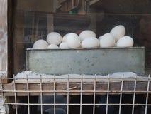 白色鸡鸡蛋在一个金属平底锅在杂货店窗口里在 库存照片