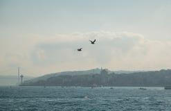白色鸥在城市的背景和Bosphorus桥梁,博斯普鲁斯海峡海峡的焦点  伊斯坦布尔,土耳其 免版税图库摄影