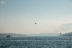 白色鸥在城市的背景和Bosphorus桥梁,博斯普鲁斯海峡海峡的焦点  伊斯坦布尔,土耳其 免版税库存照片