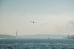 白色鸥在城市的背景和Bosphorus桥梁,博斯普鲁斯海峡海峡的焦点  伊斯坦布尔,土耳其 库存图片