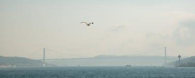 白色鸥在城市的背景和Bosphorus桥梁,博斯普鲁斯海峡海峡的焦点  伊斯坦布尔,土耳其 免版税库存图片
