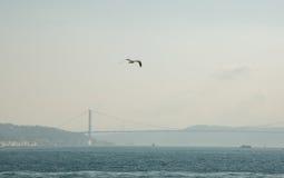白色鸥在城市的背景和Bosphorus桥梁,博斯普鲁斯海峡海峡的焦点  伊斯坦布尔,土耳其 库存照片