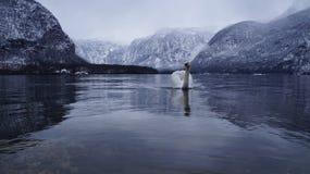 白色鹅湖 库存图片