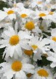 白色黄色雏菊春天开花传染媒介,低多夏天花背景 免版税库存图片