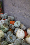 白色,橙色和青灰色灰姑娘南瓜由一个灰色南瓜补丁筒仓等待风雨如磐的巴恩 免版税库存图片