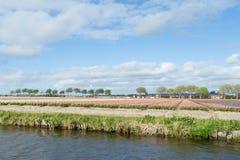 白色,蓝色和桃红色风信花的开花的花田临近Th 库存图片