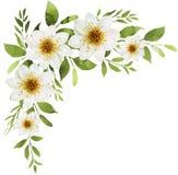 白色水彩开花与白色大丽花的花束装饰 向量例证