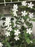 白色&桃红色花卉 库存图片