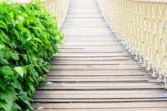 白色索桥 免版税库存图片
