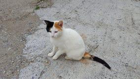 白色离群猫 免版税库存照片