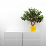 白色洗脸台的景天树植物 免版税库存照片