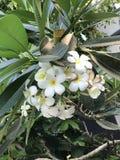 白色&黄色用花装饰 库存照片