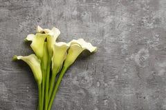 白色水芋属在灰色背景开花(马蹄莲), 库存照片
