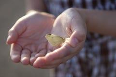 白色蝴蝶在儿童的手上。 库存图片